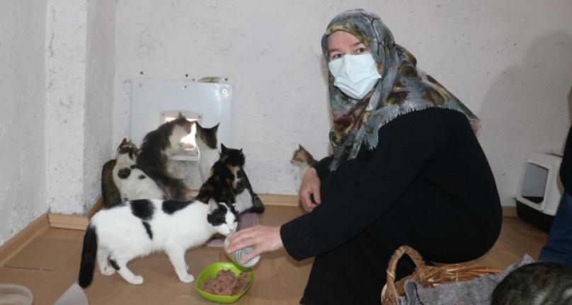 Engelli sokak kedilerine  anne oldu